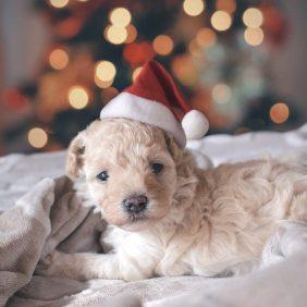 So werden Ihre Weihnachtsgrüße garantiert zum Highlight des Jahres!